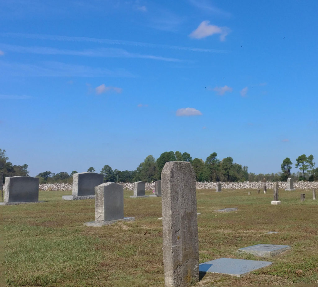 Graveyard with a cotton field in the background
