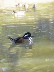 variety of birds at Sylvan Heights Bird Park