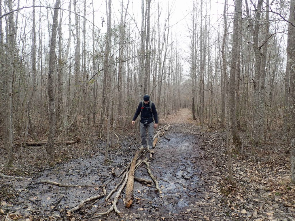 man walking across logs over muddy area of trail in Medoc Mountain State Park