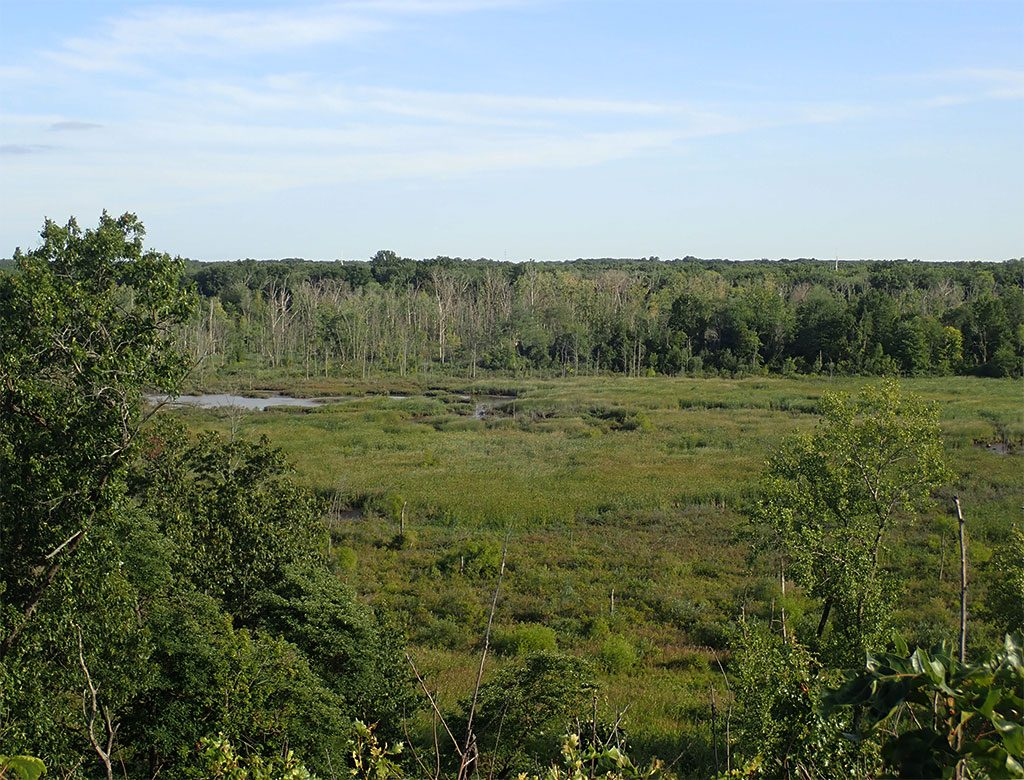 Great Marsh View at Indiana Dunes National Park