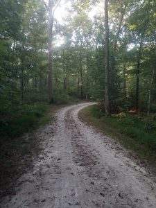 Gravel road curving into the woods