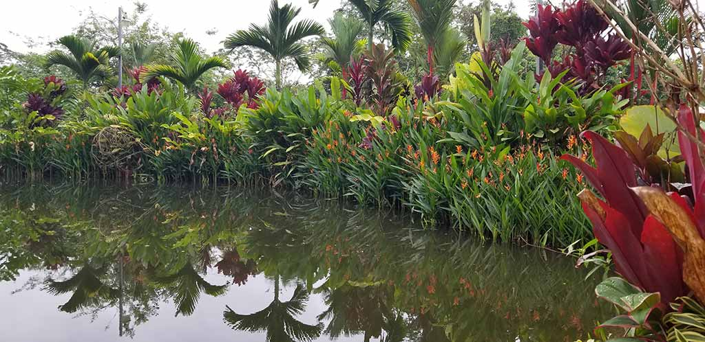 Pond surrounded by tropical flowers